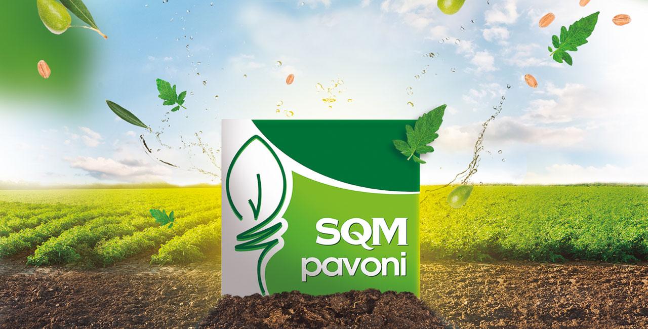 head-pavoni-sqm
